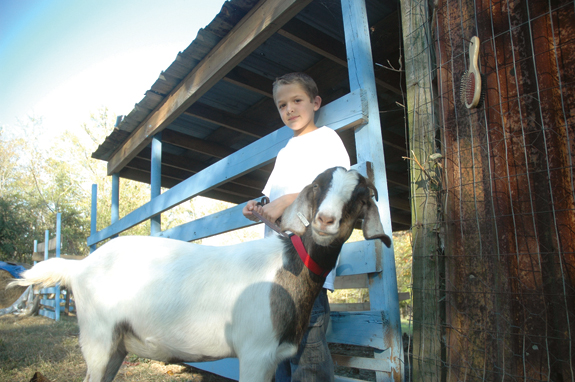 Cardenas set to show goats at State Fair