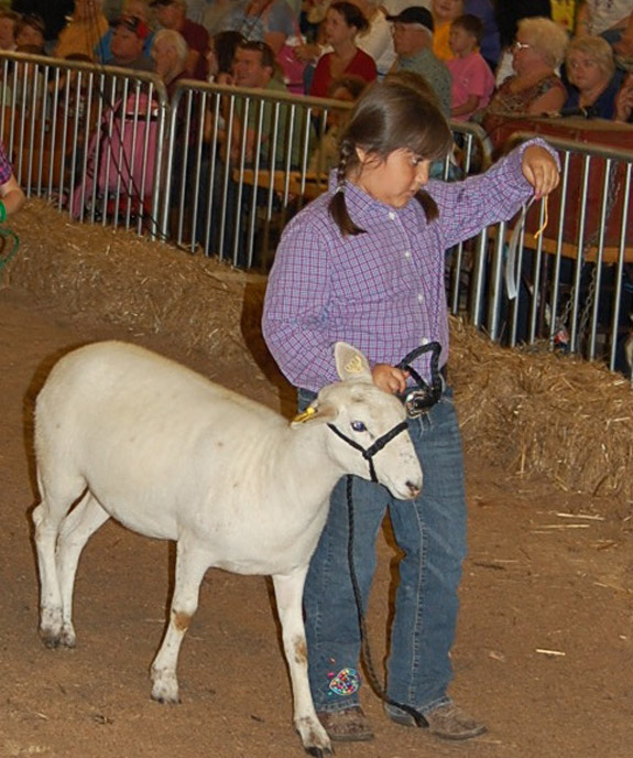 4-Hers represent Franklin County well at State Fair