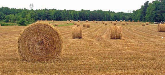 Hey! That's some nice hay
